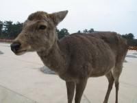 Nara stirnos